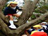 木登りならまかせて